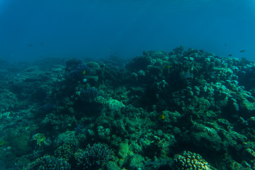 Tropical coral reef and fishes, marine life. Sea or ocean underwater.