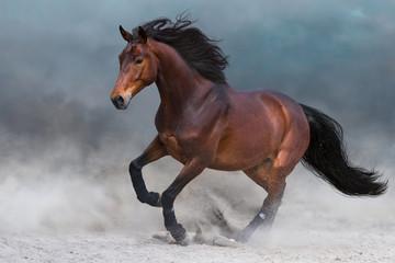 Podpalany koń w pyle biega szybko przeciw niebieskiemu niebu