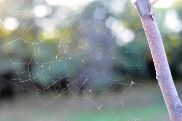 Autumn morning and the spider's web on the plants. Shallow depth of field