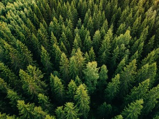 Aerial top view of summer green trees in forest in rural Finland.
