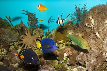 Reef Fishes in Aquarium