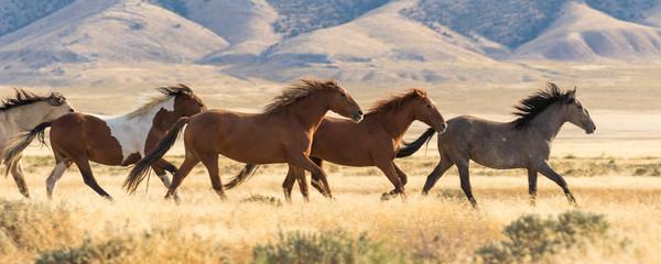 Bieg stada dzikich koni