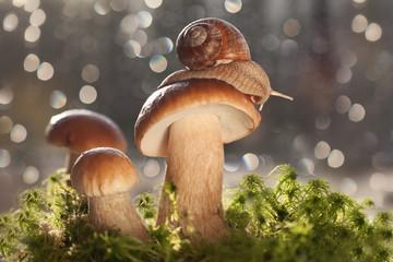 Улитка ползет по белому грибу.