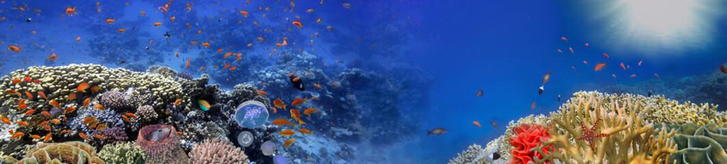 Podwodna panorama, rafa koralowa i ryby