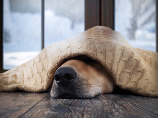The dog freezes. Funny dog wrapped in a warm blanket