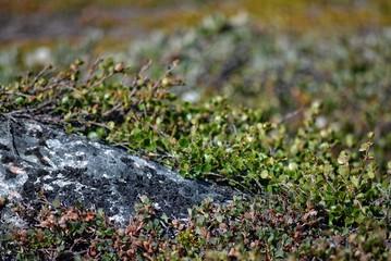 nature in Greenland Ilulissat
