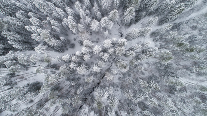 Aerial view of frozen river bend and boreal forest covered by snow