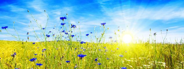 Letni krajobraz z kwiatem meadof i słońcem.