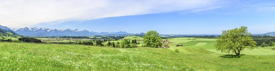 frische Frühlingswiesen am Alpenrand nahe Trauchgau
