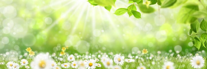 Wiosna 427