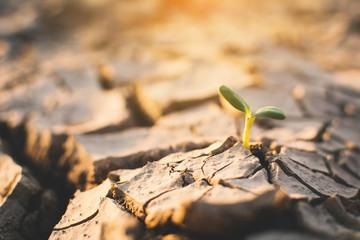 Mała zielona roślina na pęknięcie suchej ziemi, pojęcie susza