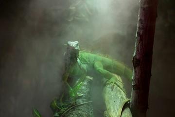 iguana avvolta dal vapore della giungla tropicale