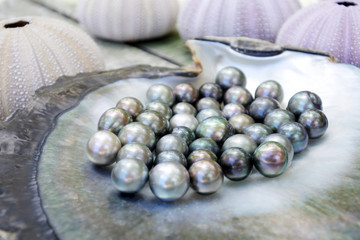 Tahitian Black Pearls in a Black lip oyster shell