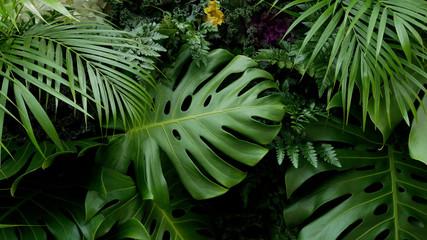 Zielone liście tropikalne Monstera, palmy, paproci i roślin ozdobnych tło tło