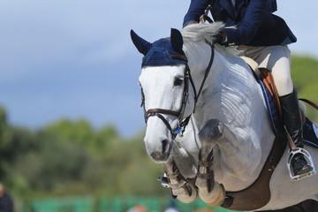 Biały koń skacze nad przeszkodą