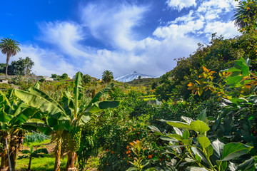 Tenerife, Canary islands, Spain: Beautiful landscape of a green valley with Teide volcano, covered in snow, in the background.
