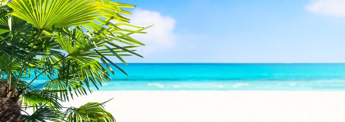 palme am sandstrand