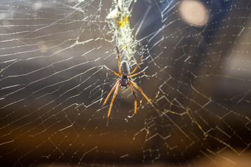 a silk spider hangs in a spiderweb