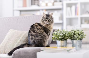 Beautiful cat at home