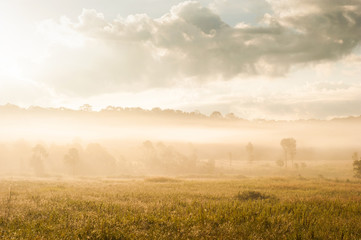 Golden sunrise shines onto the grassland.