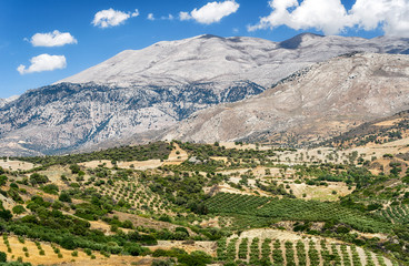 Typical Cretan country, Greece