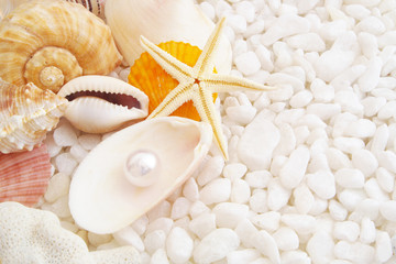 Seashells and pearl on shell with many white stones