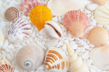 Seashells on stones background