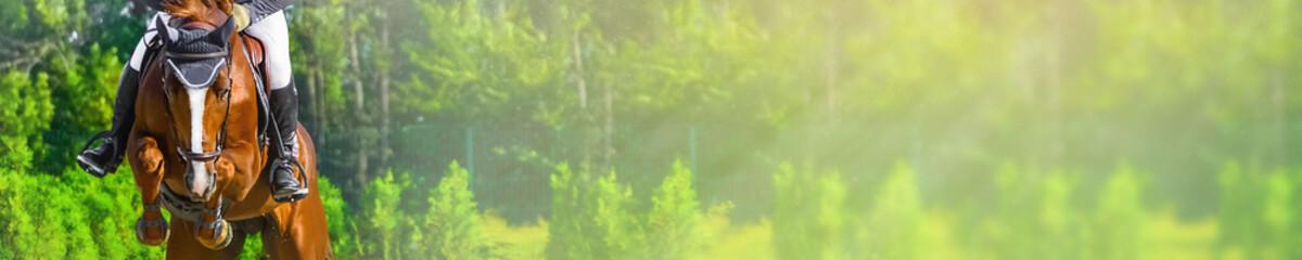 Poziomy baner fotograficzny do projektowania nagłówka strony. Szczaw konia i jeźdźca w mundurze podczas zawodów w skokach. Rozmycie zielonych drzew i promieni słonecznych jako tło. Skopiuj miejsce na tekst.