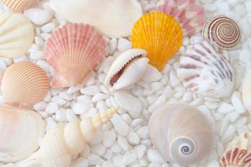 Colorful seashells on white stones background