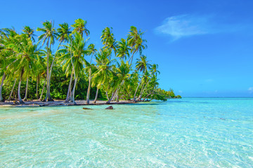Palm trees on the beach. Travel and tourism concept.