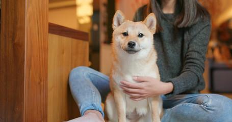 Woman brush her shiba inu dog at home