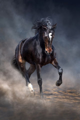 Wild horse run in dark desert dust