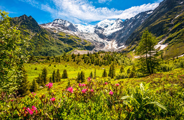Alps wild nature, blossoming meadow under the Mont Blanc glacier, ideal for wallpaper or nature calendar