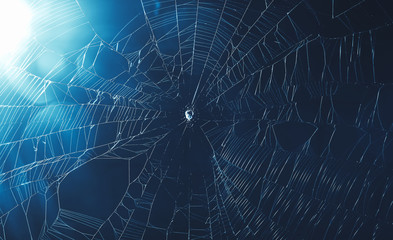 spider web in cool tone