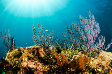 Sceny rafy koralowej Morza Corteza, Baja California Sur, Meksyk.