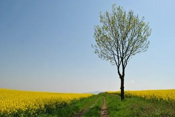 Wiosenny pejzaż wiejski