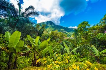 Bujne pierwotne lasy, Park Narodowy Ranomafana (gorąca woda na Malgasach), Madagaskar