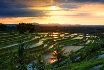 Famous Jatiluwih Rice terraces on Bali during sunrise, Indonesia