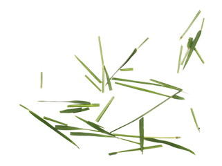 Green cut wild grass isolated on white background and texture, top view