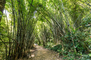 tourists exploring Bamboo forest in Khao Sok National Park, Thailand