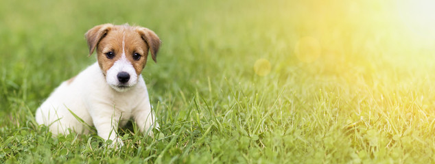 Website banner of a happy dog puppy as sitting in the grass