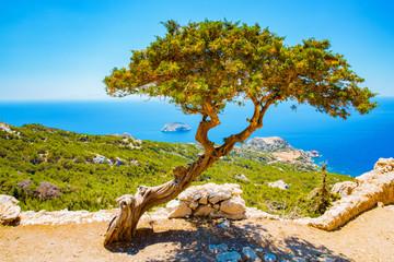 Stary drzewo przed morzem śródziemnomorskim na Rhodes wyspie, Grecja