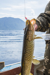 Trophy fish in the hands of a fisherman on the background of mountains and water. Pike