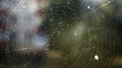 web in the city close-up