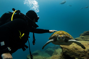 Young diver adept touching the big turtle.