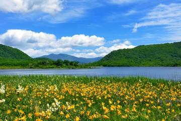 初夏の湿原・青空と花々の咲く風景