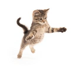 Cute tabby kitten jumping
