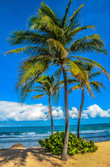 palm trees on a beautiful beach with crystal clear turquoise water and blue sky