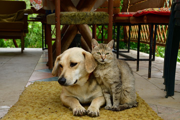 cat and dog to lounge together as a best friends