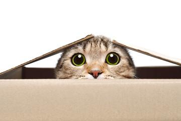 Portret śmieszny kot patrzeje z pudełka